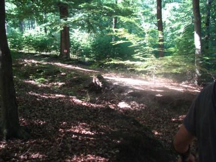...und Sonnenstrahlen, die strahlende Kleckse auf den Waldboden malen.