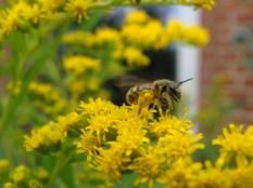 Hier noch einmal mein Lieblingsfoto mit dem vielen Blütenstaub