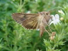 ...auch wenn man manchmal ganz schön sauer auf diese Insekten ist.