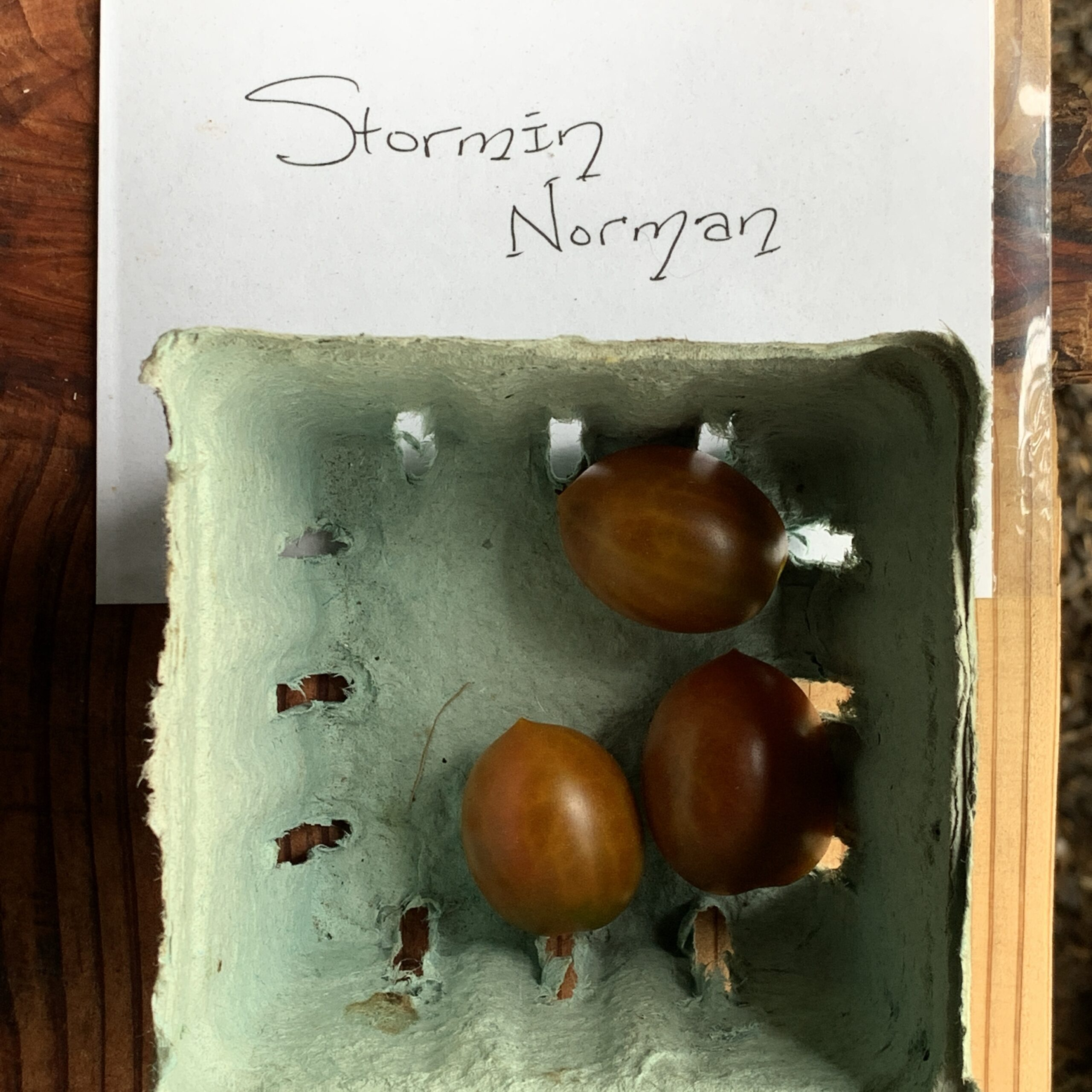 Image of Stormin' Norman tomatoes