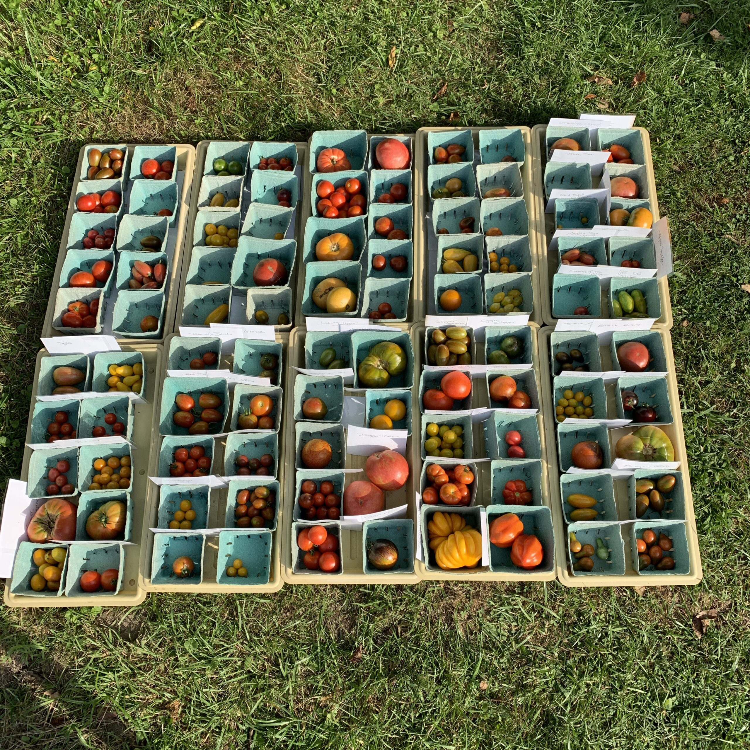 Image of one day's harvest, with about a hundred types.