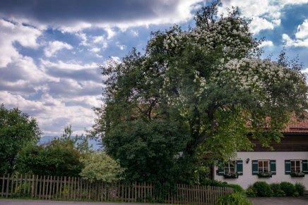 Gartenbauverein-1005929