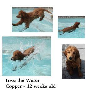 Copper44
