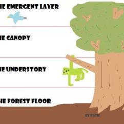 Amazon Rainforest Layers Diagram Nexon Car Alarm System Wiring Of The