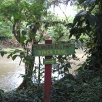Bosque Tropical del Toro
