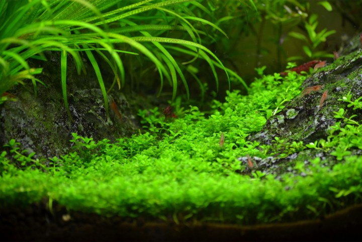 Treeless Mountain Planted Freshwater Aquarium