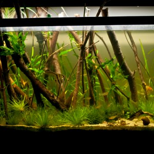 "29 gallon freshwater planted aquarium – ""Forests"""