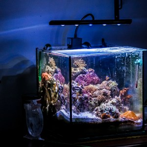 12 Gallon Nano Reef Tank