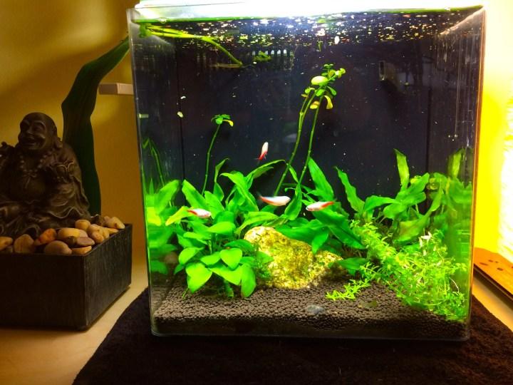 nano freshwater planted aquarium