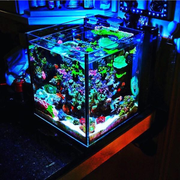 Nano coral reef tank