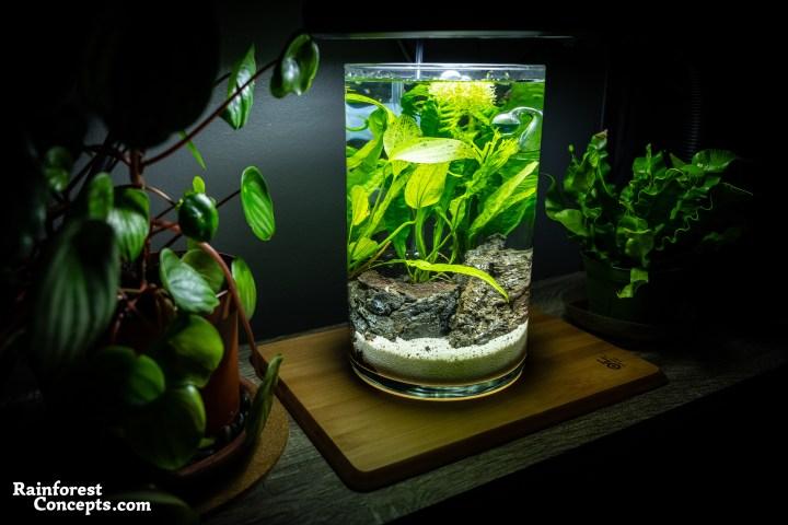 nano freshwater planted aquarium in a vase