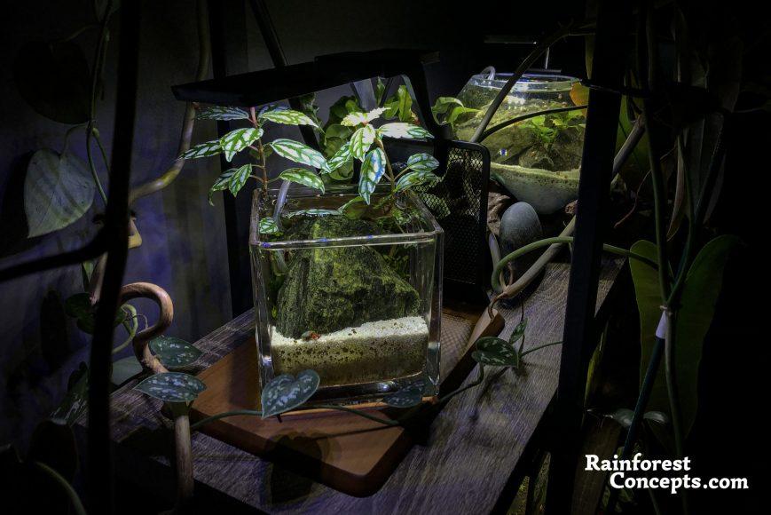 a tiny nano planted aquarium