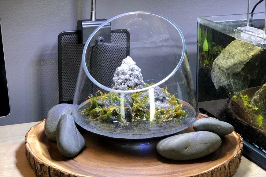 Desktop Wabi Kusa style terrarium