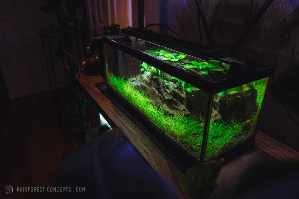 Nano low-tech aquarium on a bookshelf