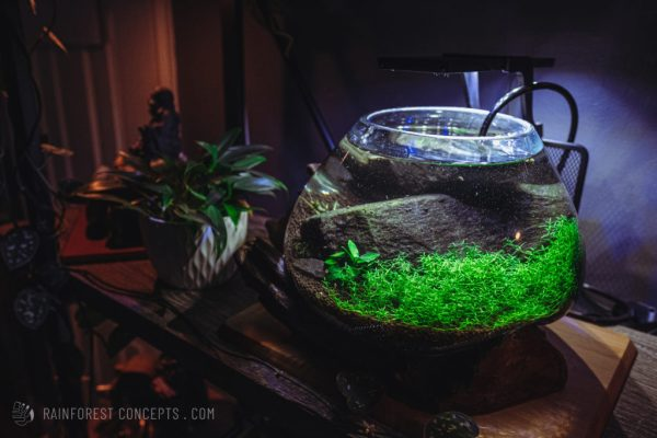 Nano low-tech planted shaped glass aquarium on a bookshelf