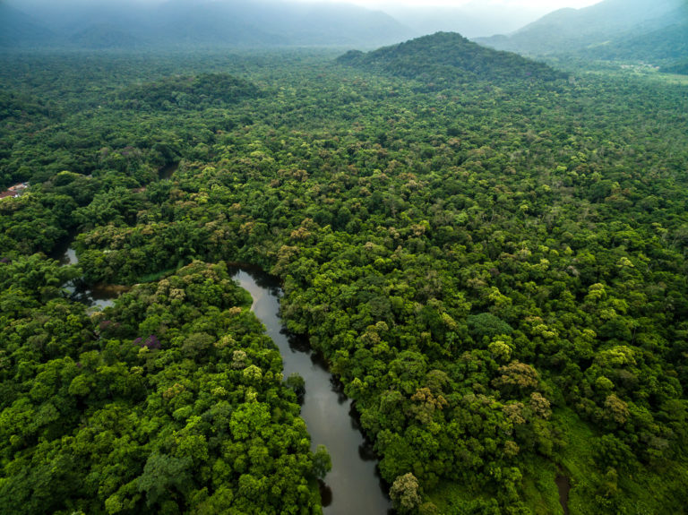 The amazon rainforest covers over 2.1 million square miles of tropical terrain in south america. Panama Rainforest Foundation Us