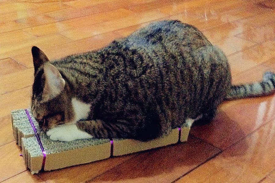 貓物║10分鐘完成自製DIY貓抓板