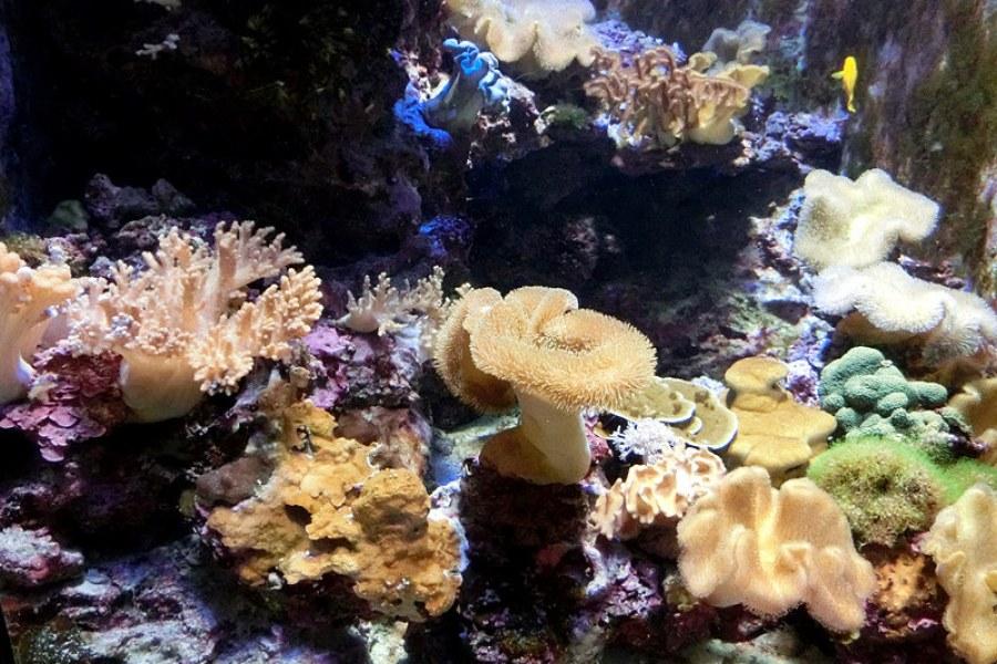 [沖繩] 本部町 沖繩美麗海水族館 Okinawa Churaumi Aquarium (影片)