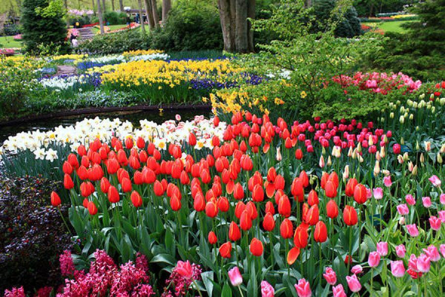 [荷蘭] 利瑟 Lisse @ 庫肯霍夫 Keukenhof 世界上最大的鬱金香花園