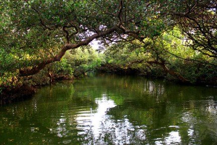 [台南] 四草 二訪台灣亞馬遜 - 大眾廟紅樹林竹筏港水道 (影片)