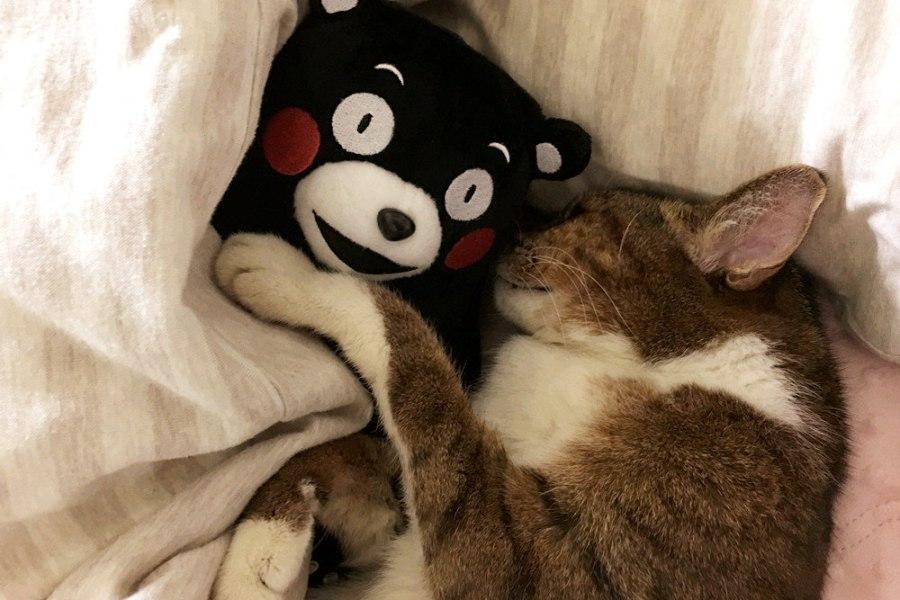 貓咪保健食品,營養品補充保健~咪咪的健康大補帖!