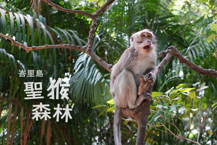 峇里島聖猴森林公園 Ubud Monkey Forest 烏布景點,猴子森林交通、門票、出入口位置