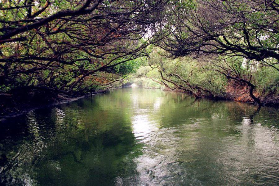 台南四草紅樹林綠色隧道,必訪台灣袖珍版亞馬遜河!!