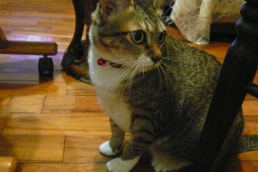 貓物║咪咪的新項圈