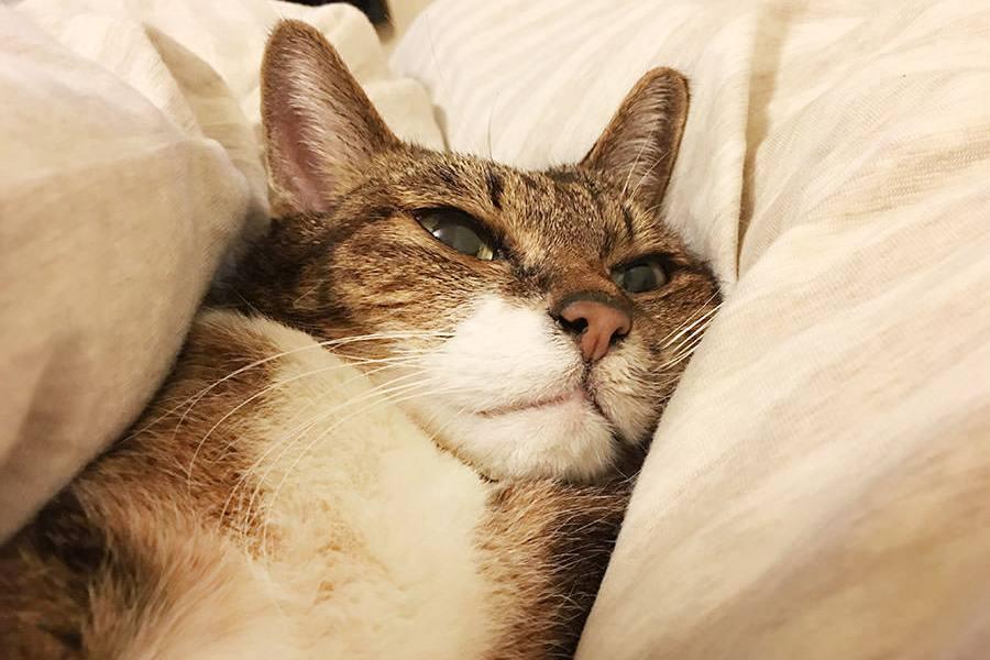腎胰老貓罐頭選擇:低磷低脂腎貓主食罐 / 商業副食罐 / 熟蛋白補充熱量 / 咪咪的零食小確幸