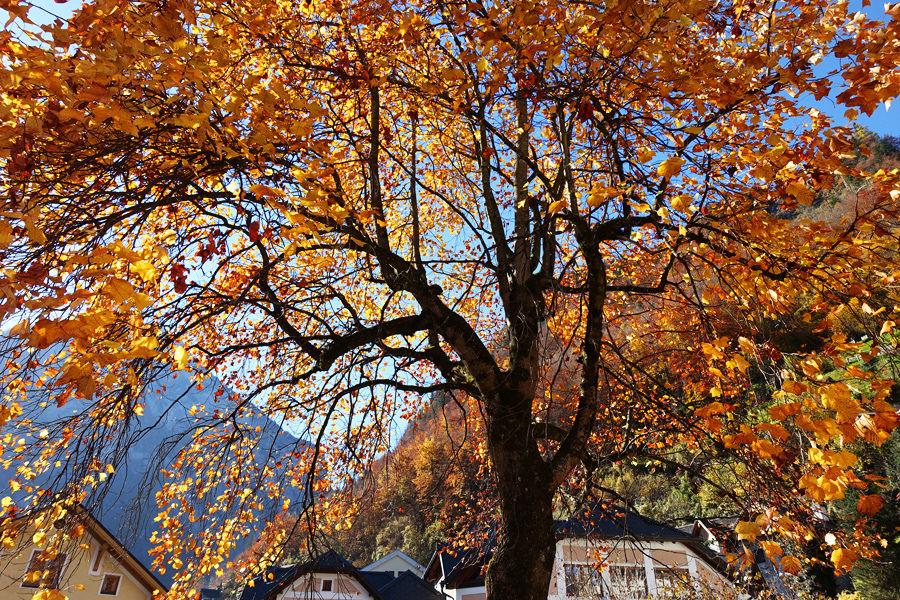 哈修塔特 Hallstatt 旅遊實用景點交通資訊,仙境隨筆