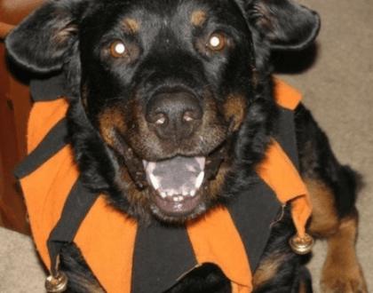 Rainier Veterinary Hospital Dog of the Month, September 2016: Dakota
