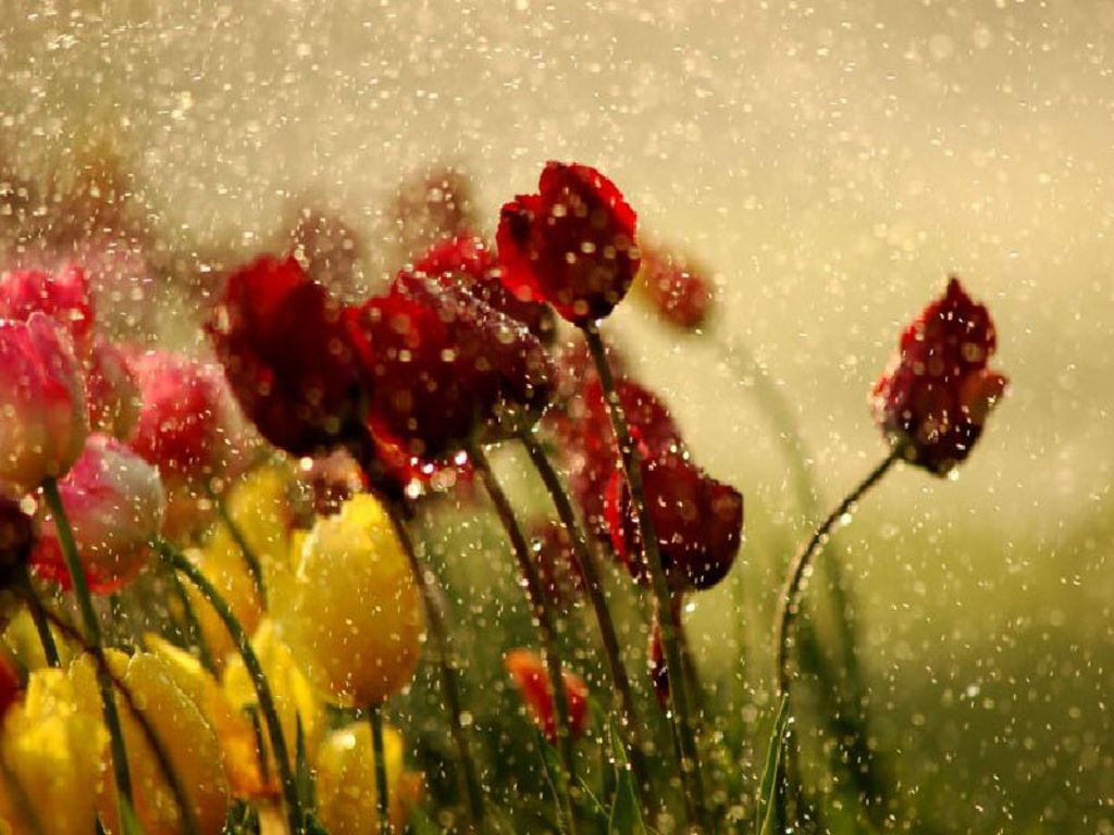 Falling Water Live Wallpaper Raining Angels By Renee Robinson