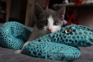 Playing Kitten - Cat sitting