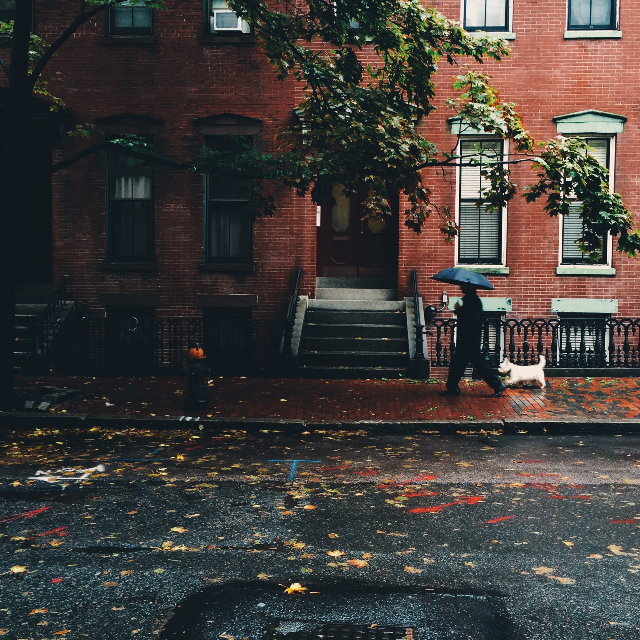 Puppies In Fall Wallpaper 10 Things I Love