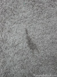 Get Pet Stains and Odors Out of Your Carpet without Chemicals