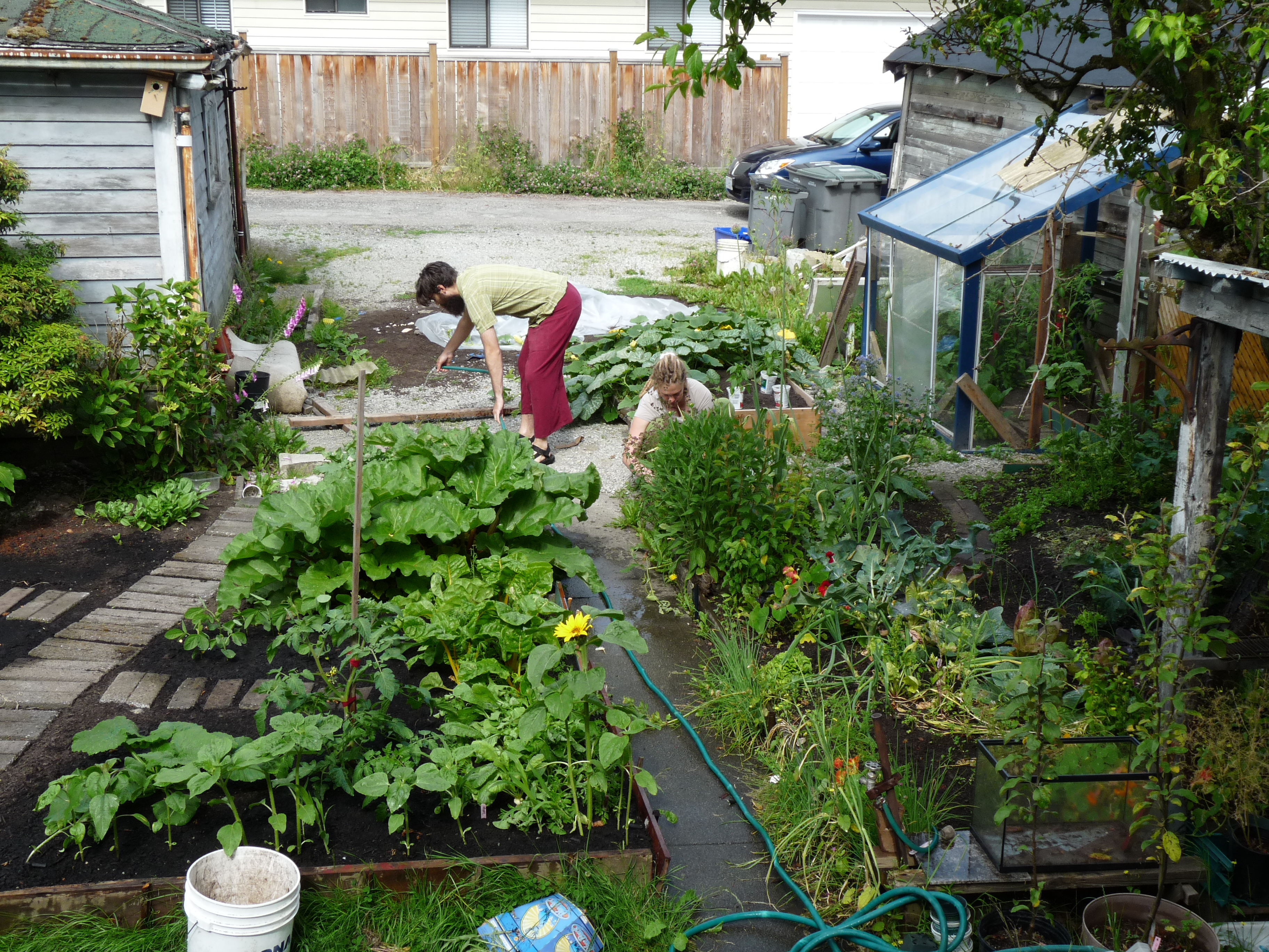 Backyard Food Growing Permaculture Backyard Gardens! Pinterest