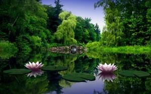 lotus-flower-IV