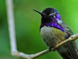 Even hummingbirds sit and rest now and then.
