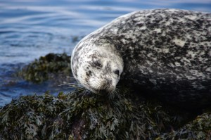 Happy seal smile