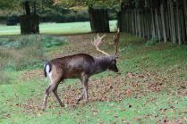 Dunham Massey - National Trust (35)