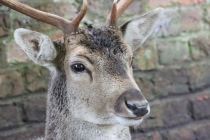 Dunham Massey - National Trust (37)