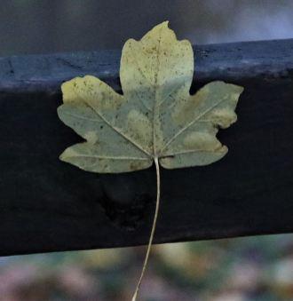 Peak Forest canal - Autumn