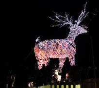 Dunham Massey Christmas lights