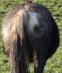 Horse views