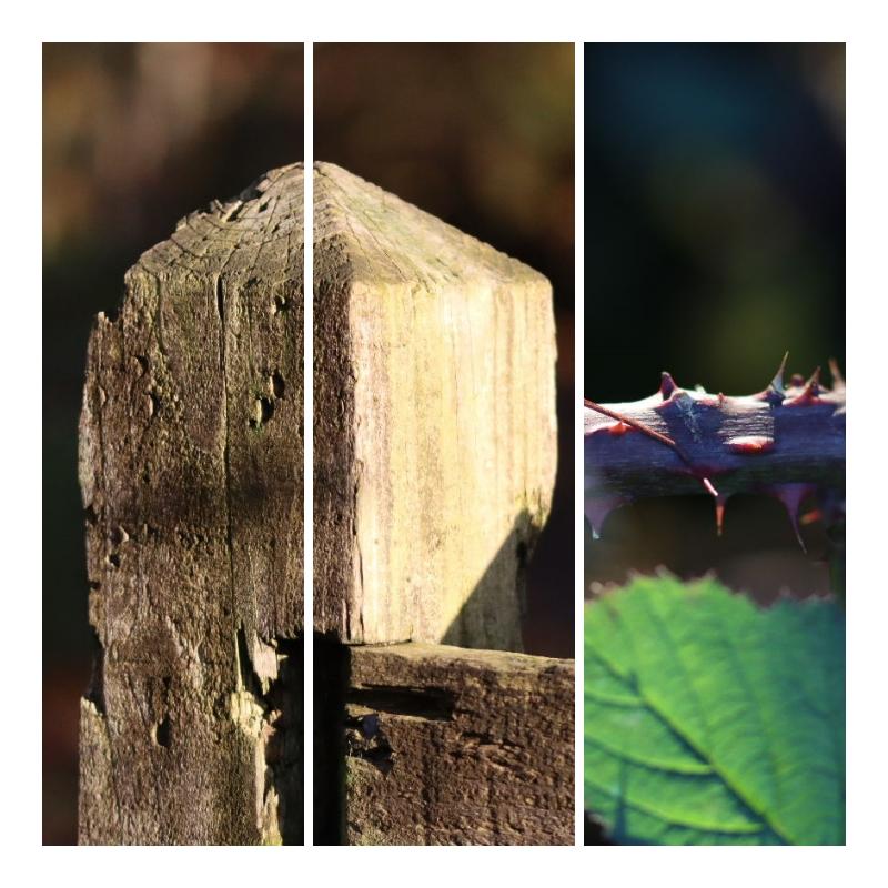 Autumn walk – Sigma 105mm F2.8 DG Macro HSM lens