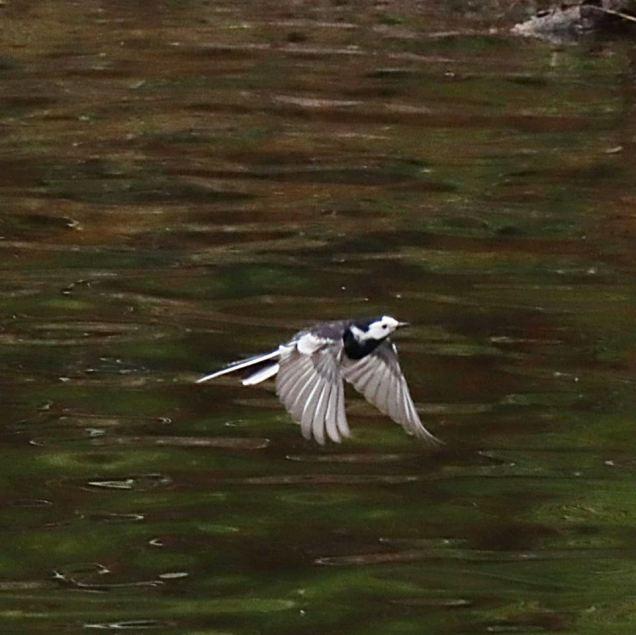 Tricky to catch in flight