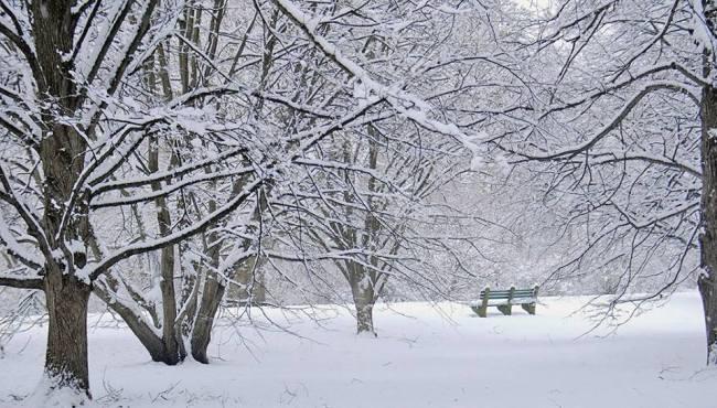 ArboretumSnow4