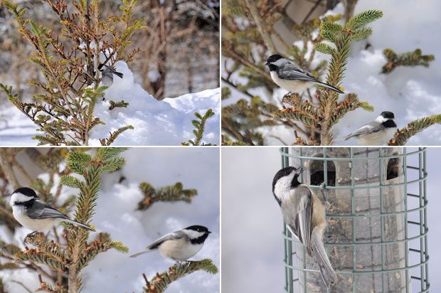 Birdblind_shots