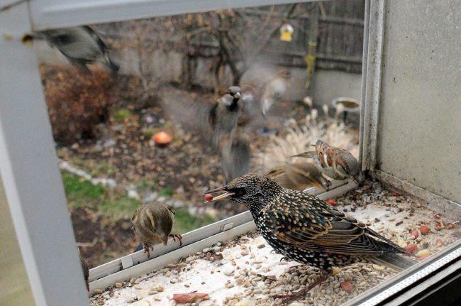 StarlingsSharing