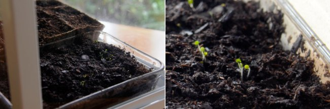 Seedlings3